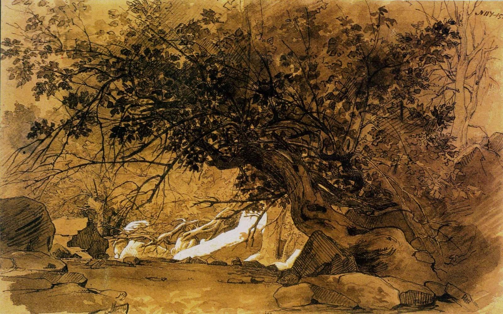 Дерева Мангишлаку